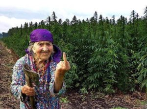 Never, ever mix recreational marijuana and family...it's a waste of a good high!