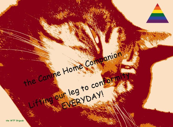 A spay a day keeps the  Tom cats away!