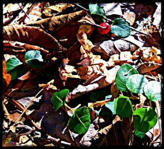 a winters flower 4
