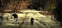 dogs and gods 2