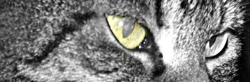 ina cats eye 3