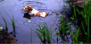 Morrill Pond