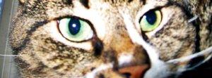 green eyed ladies 4