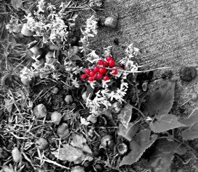 weeds-4