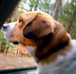 car-dog-1