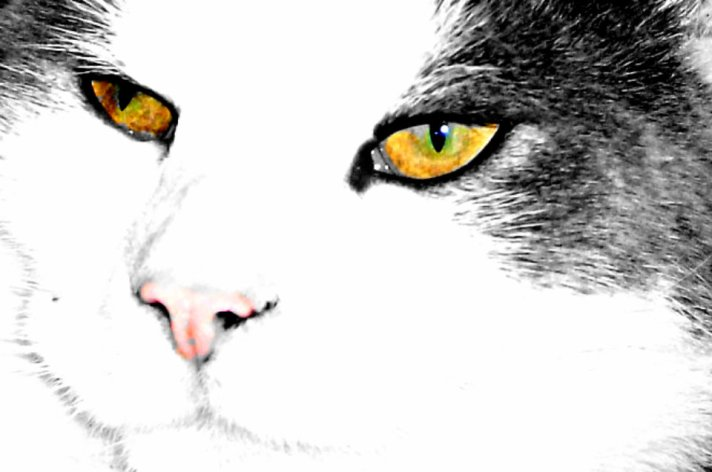 """""""The way to get on with a cat is to treat it as an equal - or even better, as the superior it knows itself to be."""" - Elizabeth Peters"""