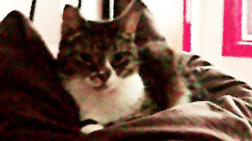 My Gay Cats…