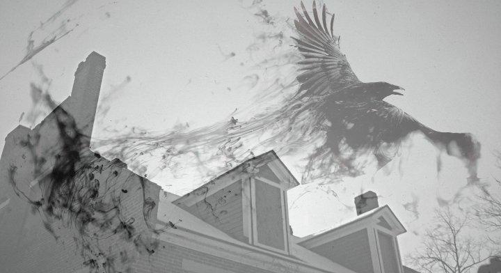raven-3