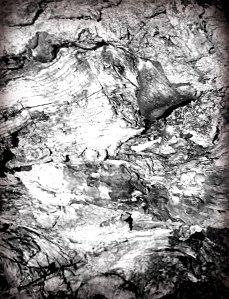 oak-3