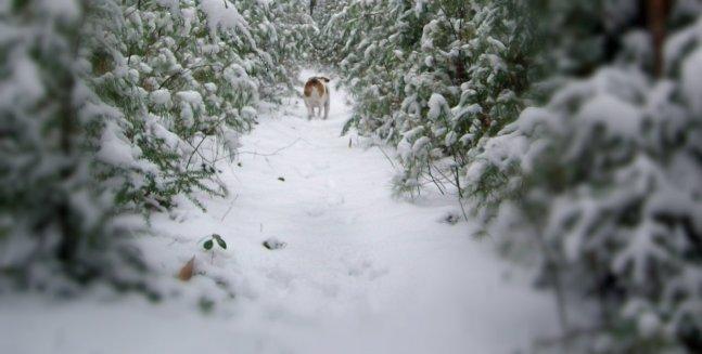 bogie n snow