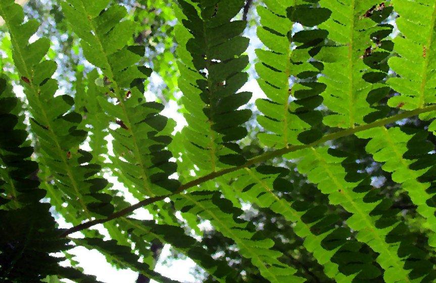 Frivolous Green