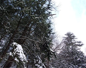 x snowy forest