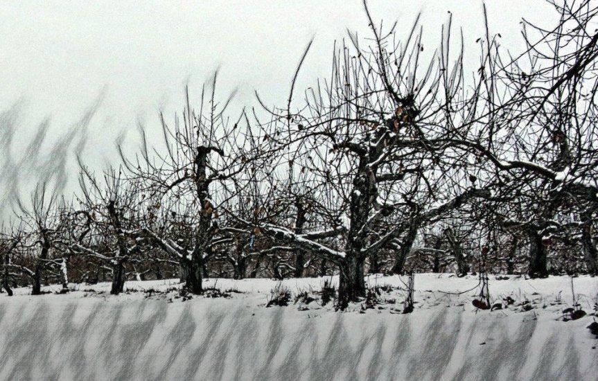 Winter's Apple