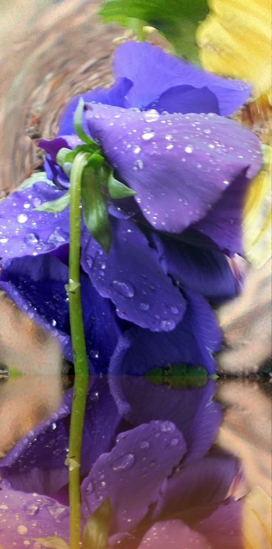 periwinkle reflection