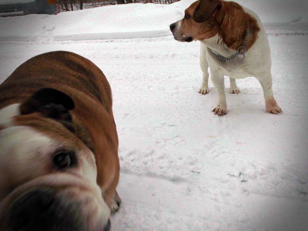 """Dogs are the magicians of the universe."" ― Clarissa Pinkola Estés"